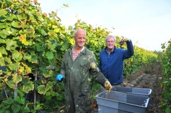 wijnboerderij druivenoogsten 2014 (16)